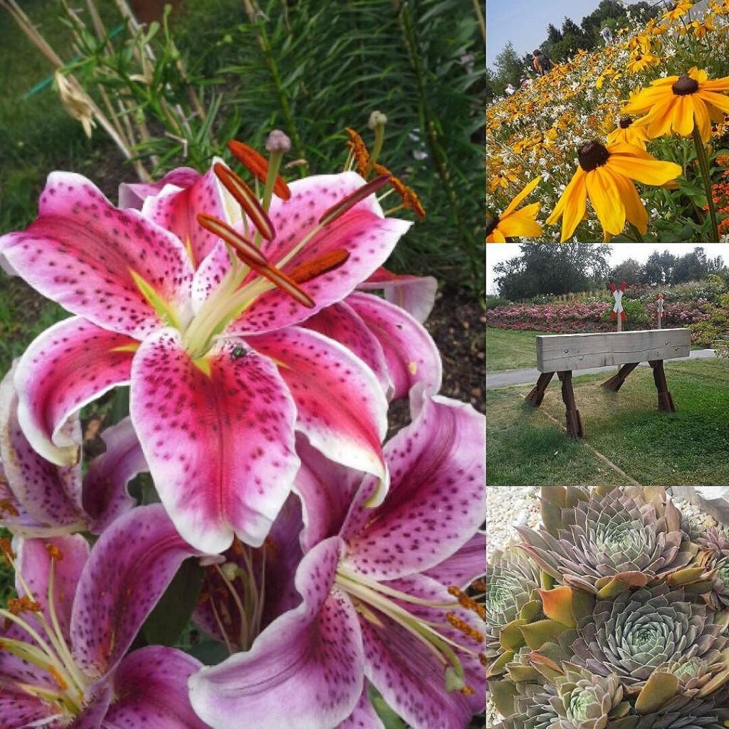 Heute das schöne Wetter genutzt und die #landesgartenschau in der Heimat in #oelsnitzerzgebirge besucht. Sehr schön! &e #LAGA2015 #sovieleschöneblumen #flowers #schönertag #sommerliebe #sommer #natur #nature